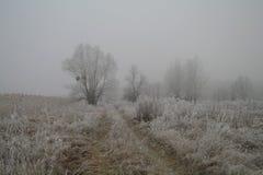 Escarcha magnífica en abedules Un bosque del invierno en el levantamiento en una helada dura Foto de archivo