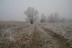 Escarcha magnífica en abedules Un bosque del invierno en el levantamiento en una helada dura Fotografía de archivo