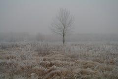 Escarcha magnífica en abedules Un bosque del invierno en el levantamiento en una helada dura Imagenes de archivo