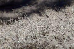 Escarcha no prado selvagem Imagens de Stock