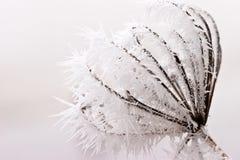 Escarcha o escarcha suave en las plantas en un día de invierno Fotos de archivo