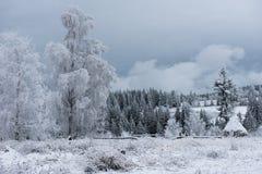 Escarcha y nieve de la escarcha en abedul y abetos Fotografía de archivo