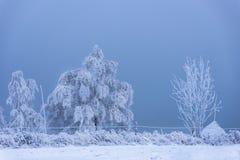 Escarcha y nieve de la escarcha en ramas de árbol de abedul Imágenes de archivo libres de regalías