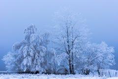 Escarcha y nieve de la escarcha en ramas de árbol de abedul Fotografía de archivo libre de regalías