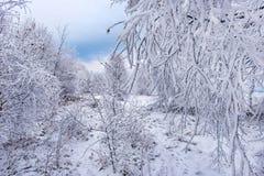 Escarcha y nieve en árboles de abedul País de las maravillas del invierno Fotografía de archivo