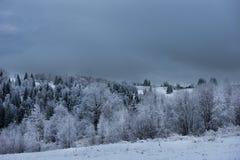 Escarcha y nieve en árboles de abedul País de las maravillas del invierno Foto de archivo