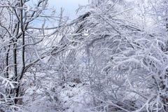 Escarcha y nieve en árboles de abedul País de las maravillas del invierno Fotografía de archivo libre de regalías