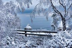 Escarcha y nieve en árboles de abedul País de las maravillas del invierno Imágenes de archivo libres de regalías