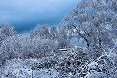 Escarcha y nieve en árboles de abedul País de las maravillas del invierno Imagen de archivo