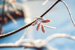 Escarcha y nieve en los árboles en bosque del invierno Imágenes de archivo libres de regalías