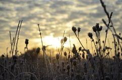 Escarcha y sol Foto de archivo
