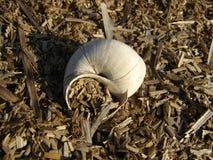 Escargot à la maison photographie stock