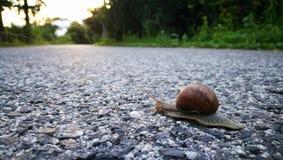 Escargot à la route Photographie stock