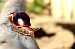 escargot стоковое изображение rf