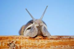 Escargot. Photo libre de droits