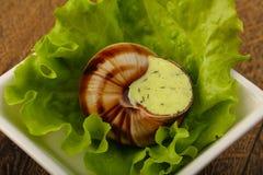 escargot στοκ εικόνα με δικαίωμα ελεύθερης χρήσης