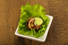 escargot στοκ εικόνες με δικαίωμα ελεύθερης χρήσης