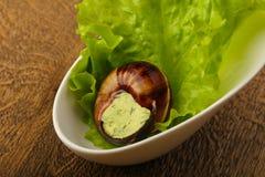 escargot 免版税库存照片