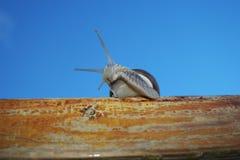 Escargot. Image stock