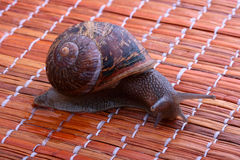 Escargot Photo libre de droits