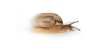 Escargot illustration stock