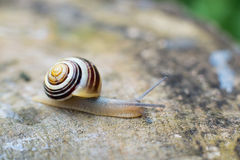 Escargot Photographie stock