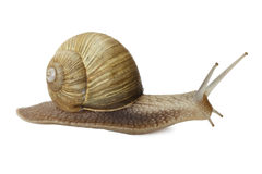 Escargot images stock