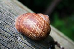 Escargot Image stock