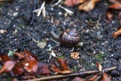Escargot Photographie stock