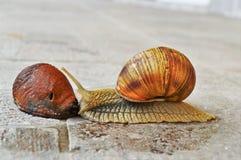 Escargot Photo libre de droits