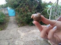 Escargot Images libres de droits