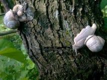 Escargot Photo stock