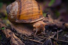 Escargot Photos libres de droits