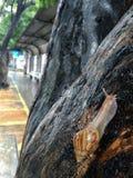 Escargot allant un arbre Photographie stock libre de droits