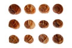 Escargot arranged in row Royalty Free Stock Photo