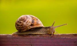 Escargot attendant un miracle Photographie stock libre de droits