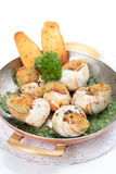 Escargot au gratin in metal serving pan Royalty Free Stock Photo