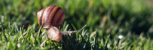 Escargot au parc Mountain View de Shoreline Photos stock