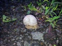 Escargot au sol photographie stock libre de droits