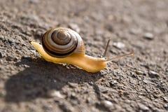 Escargot au soleil Photo libre de droits