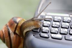 Escargot au téléphone Photographie stock libre de droits