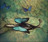 Escargot avec des ailes Image stock