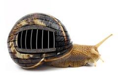 Escargot avec des barres de prison Photographie stock