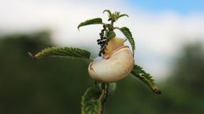 Escargot avec des feuilles de vert sur la branche Image libre de droits