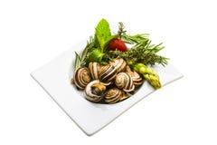 Escargot avec l'asperge, romarin, thymus Images libres de droits
