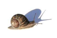 Escargot avec l'ombre Image libre de droits