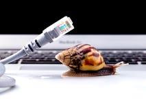 Escargot avec la photo symbolique du connecteur rj45 pour l'Internet lent photo libre de droits