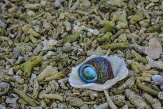 Escargot avec le corail de chute sur la plage Images stock