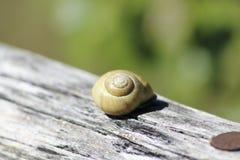 Escargot avec une coquille d'escargot Image stock