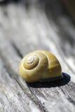 Escargot avec une coquille d'escargot Images stock